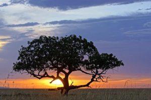 ATh-Benny-Rebel-Fotoreise-Serengeti-Tansania