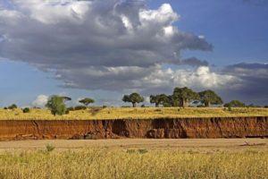 ATj-Benny-Rebel-Fotoreise-Tansania-Tarangire