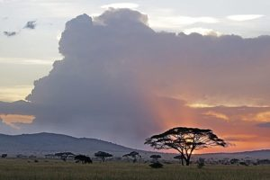 ATlBenny-Rebel-Fotoreise-Tansania-Gnu
