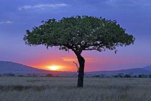 ATo-Benny-Rebel-Fotoreise-Serengeti-Tansania