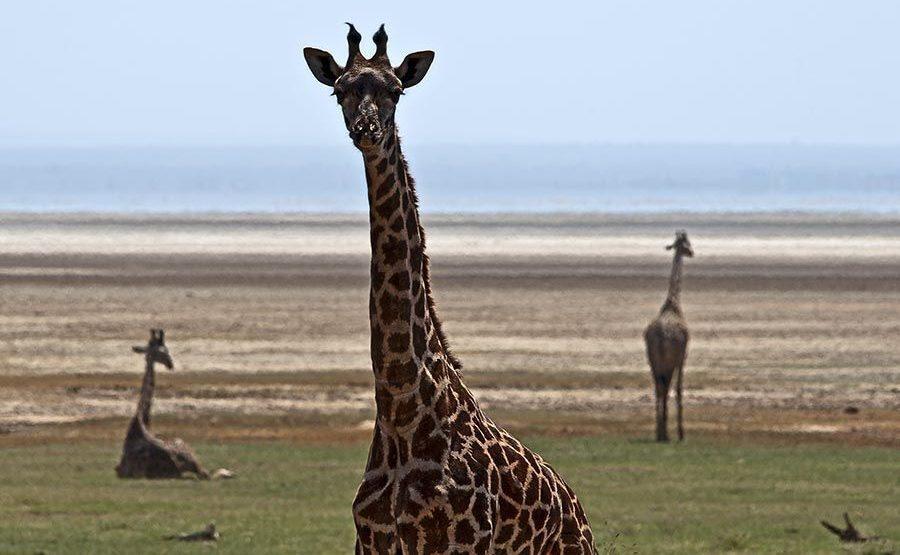 AVoBenny-Rebel-Fotosafari-Tansania