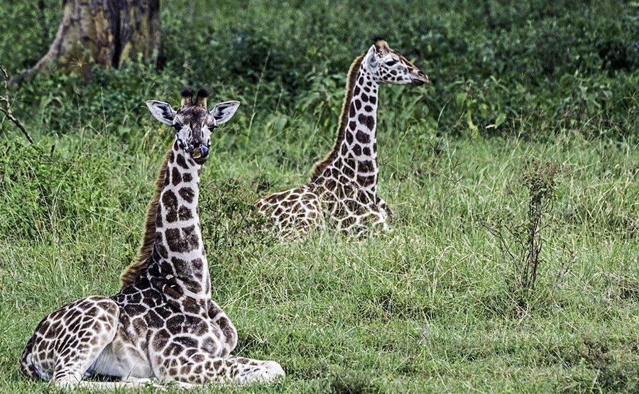 AVqBenny-Rebel-Fotosafari-Kenia