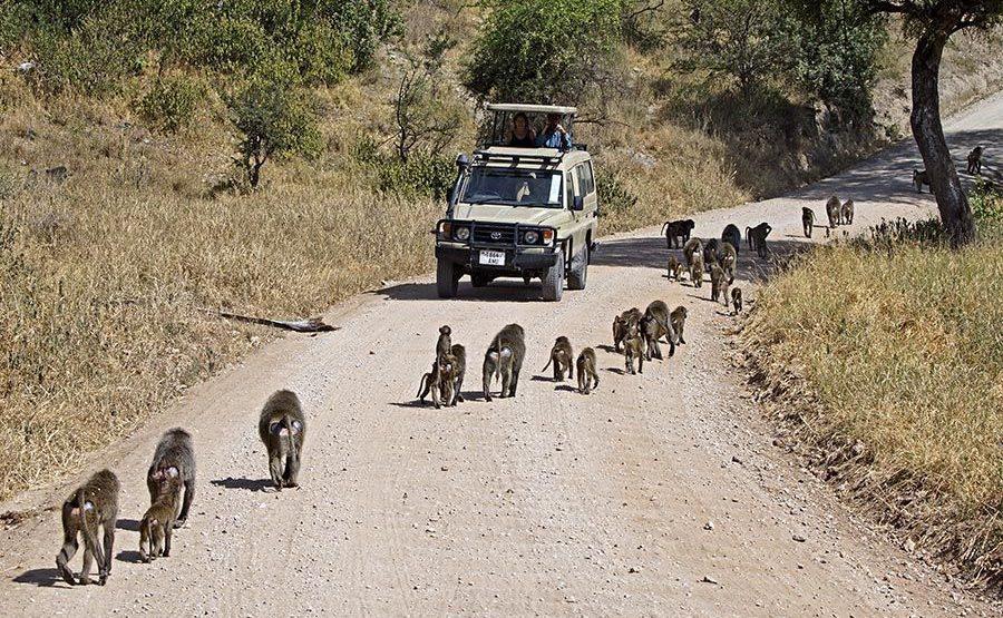 BAA-Benny-Rebel-Fotoreise-Tansania-Tarangire-Tourismus