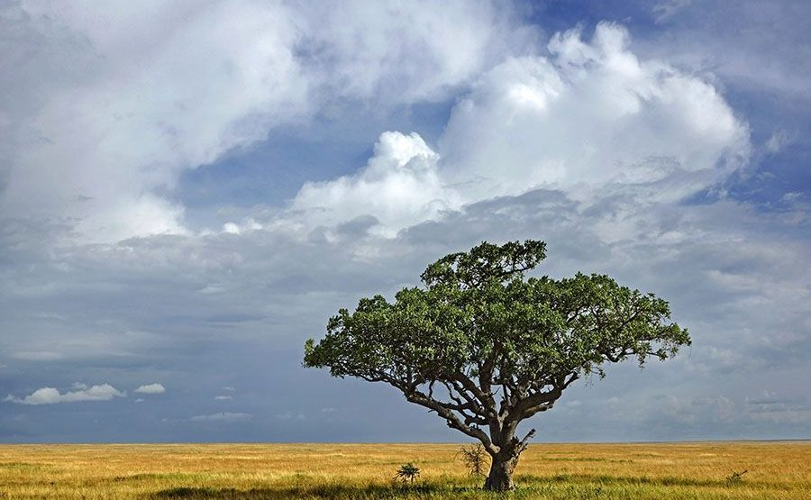 BDBenny-Rebel-Fotoworkshop-Tansania