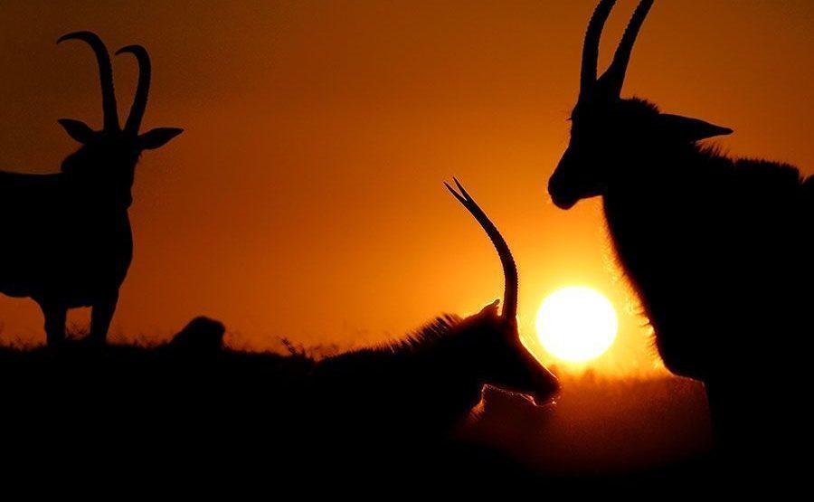 BXBenny-Rebel-Fotoreise-Suedafrika