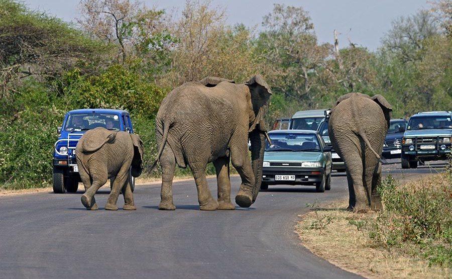 CD-Benny-Rebel-Fotoreise-Suedafrika-Tourismus