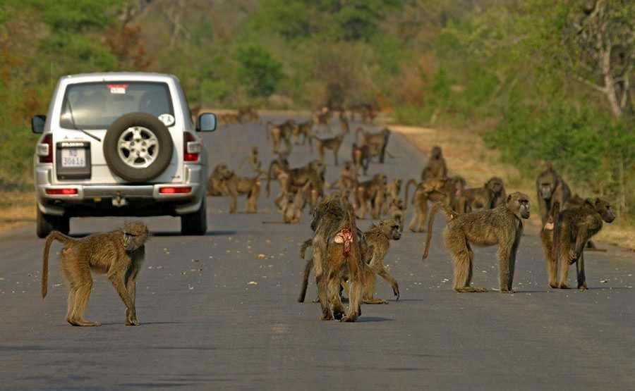 CDQ-Benny-Rebel-Fotoreise-Suedafrika-Tourismus