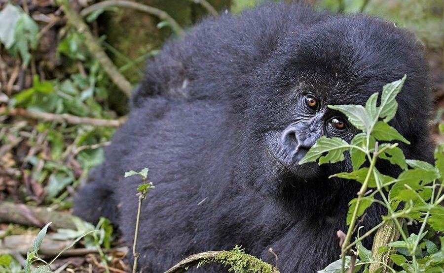 CNBenny-Rebel-Fotoreise-Ruanda