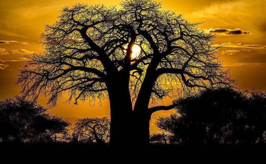 DBZBenny-Rebel-Fotosafari-Tansania-Affenbrotbaum