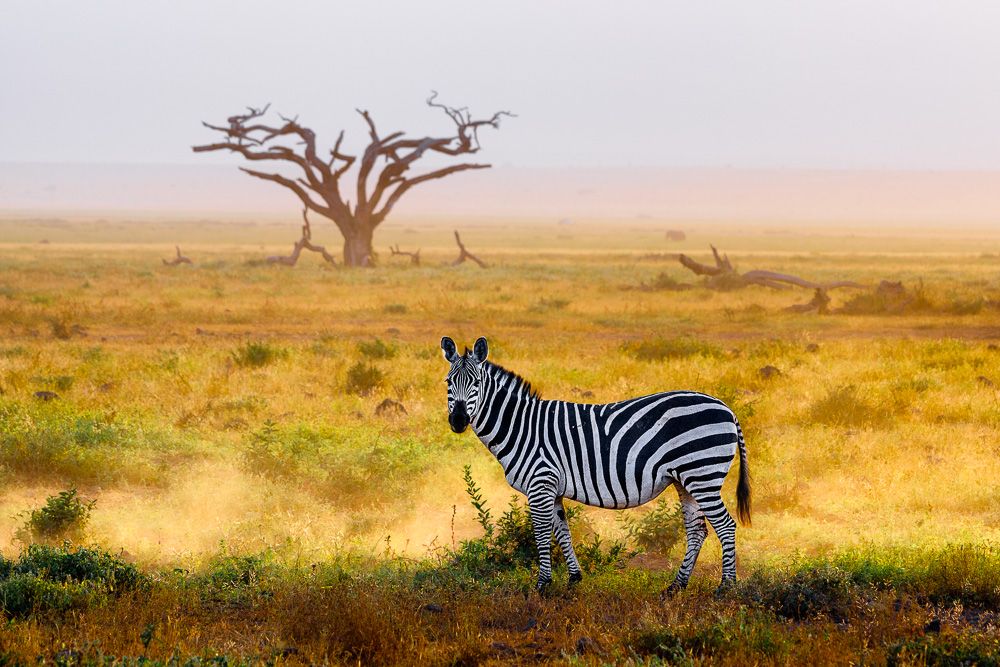 Fotoreise Kenia, Benny Rebel, Zebra Steppe