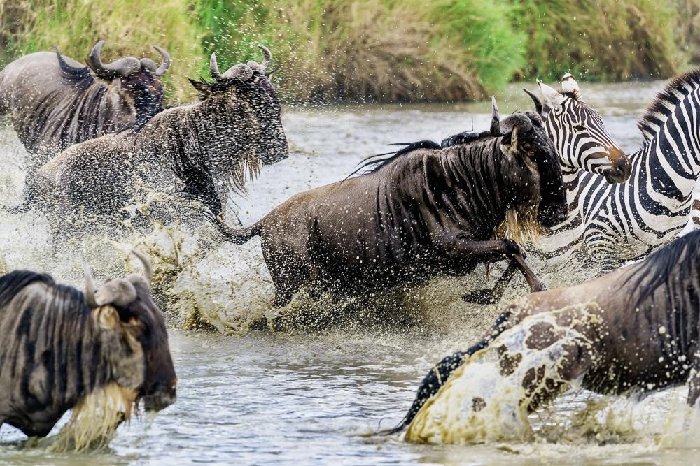 Fotoreise Kenia, Benny Rebel, Gnuwanderung