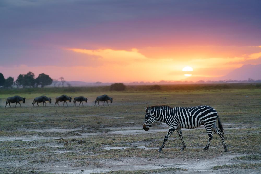 Fotoreise Kenia, Benny Rebel, Zebra, Sonnenuntergang
