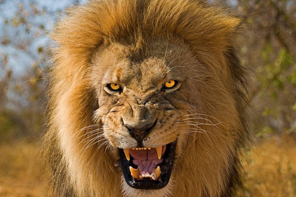 Fotoreise Kenia, Benny Rebel, Löwenkopf