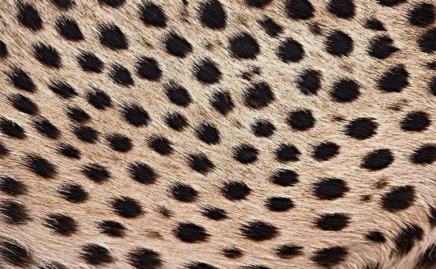 KB-Benny-Rebel-Fotoreise-Gepard-Suedafrika