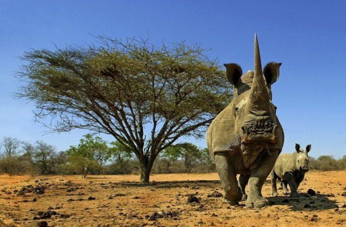 Das Nashorn und ich