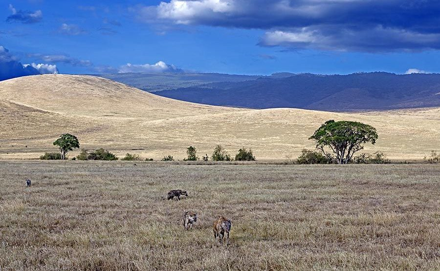 AAA-Benny-Rebel-Fotoreise-Namibia-Hyaene