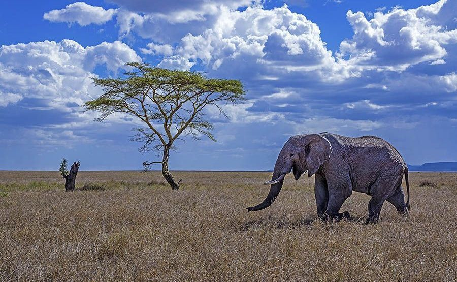 AAA-Benny-Rebel-Fotoreise-Tansania-Elefantt