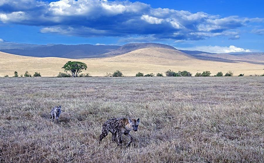 AAB-Benny-Rebel-Fotoreise-Namibia-Hyaene