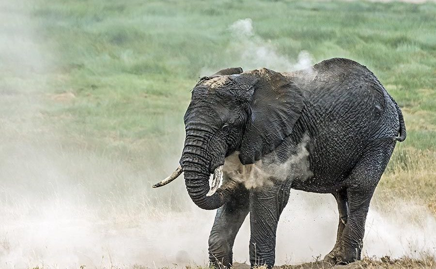 AAB-Benny-Rebel-Fotoreise-Tansania-ElefantElefant