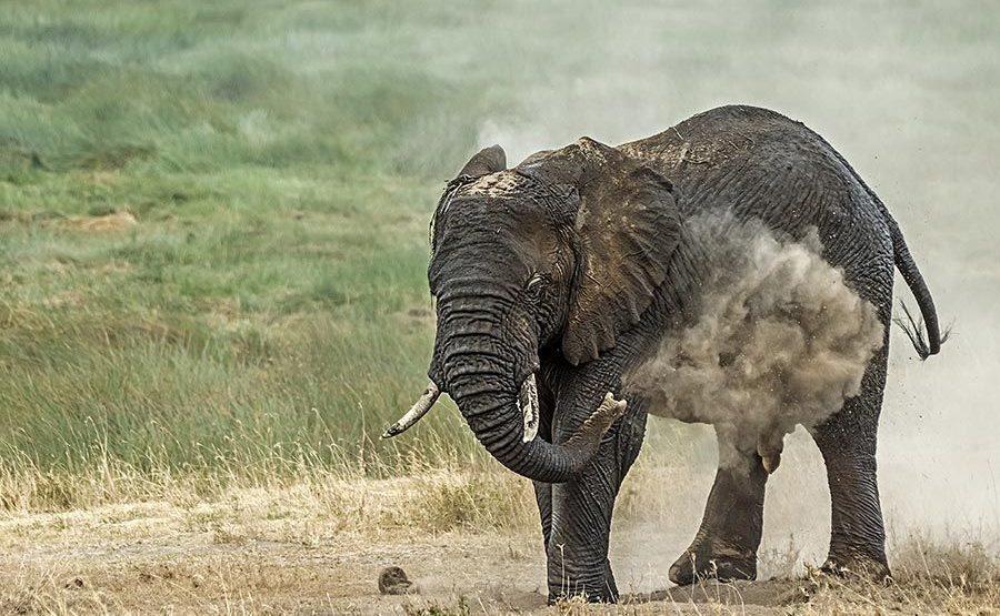 AAC-Benny-Rebel-Fotoreise-Tansania-Elefant
