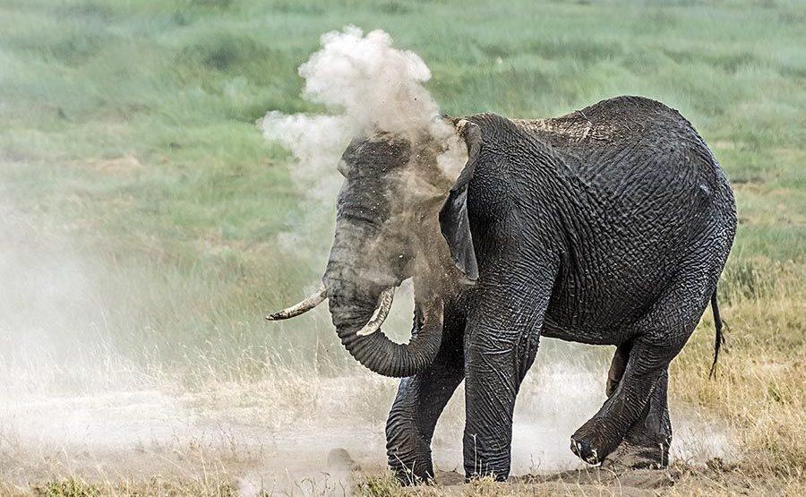 AAD-Benny-Rebel-Fotoreise-Tansania-Elefant
