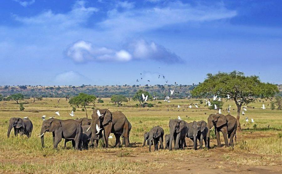 AAE-Benny-Rebel-Fotoreise-Tansania-Elefant