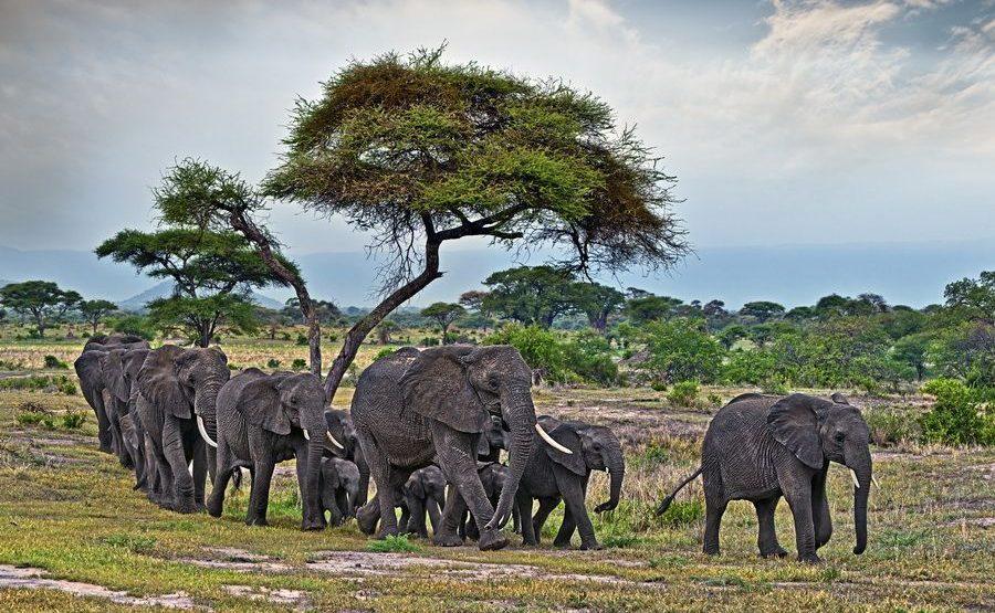 AAF-Benny-Rebel-Fotoreise-Tansania-Elefant