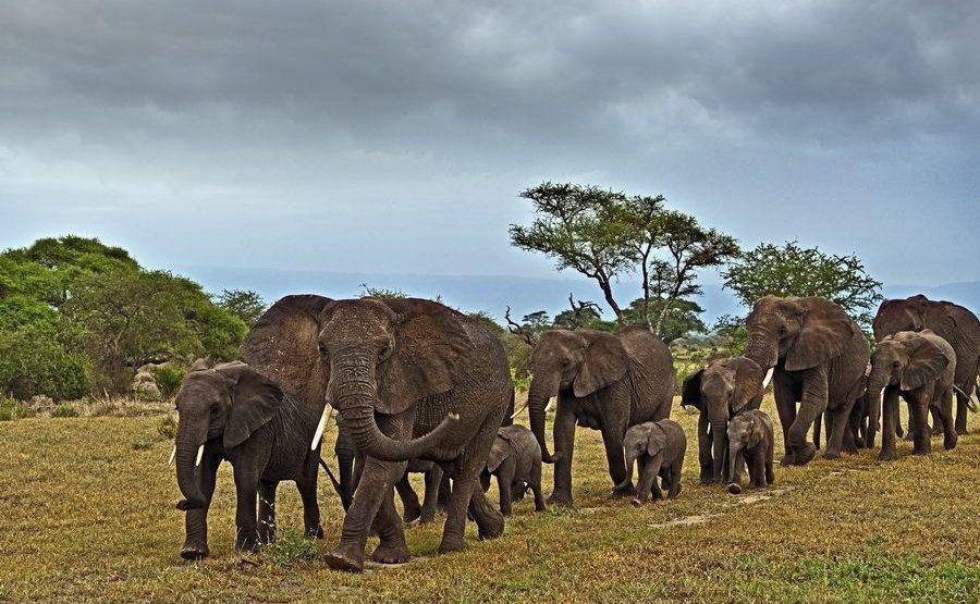 AAG-Benny-Rebel-Fotoreise-Tansania-Elefant