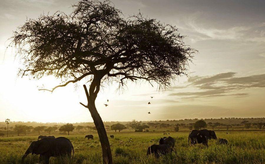 AAH-Benny-Rebel-Fotoreise-Tansania-Elefant