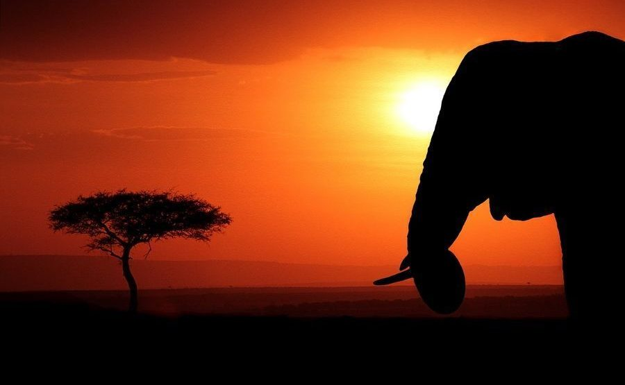 AAI-Benny-Rebel-Fotoreise-Kenia-Elefant