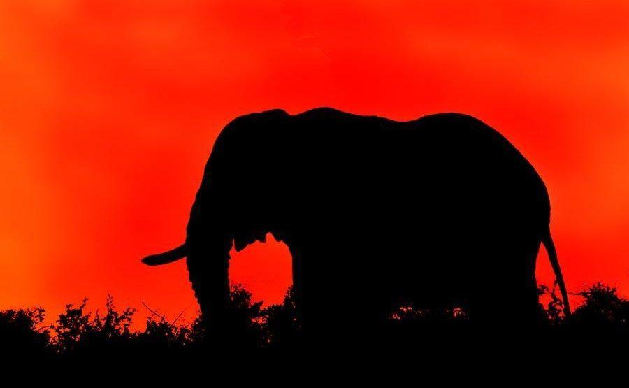AAIA-Benny-Rebel-Fotoreise-Kenia-Elefant