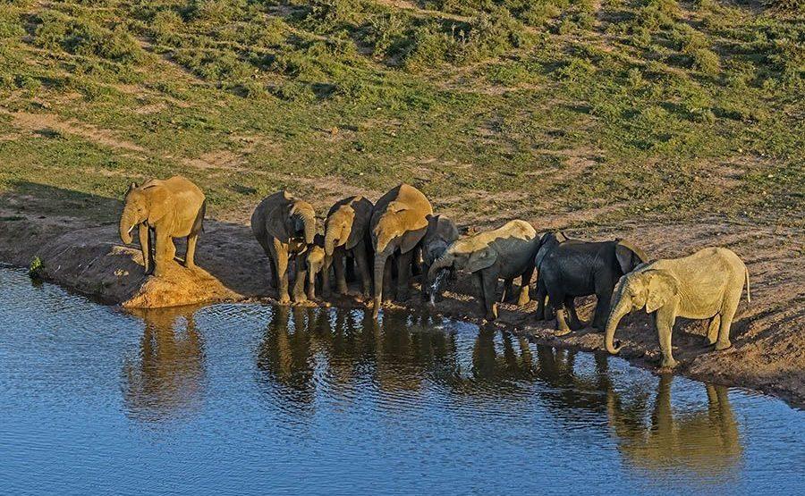 AAK-Benny-Rebel-Fotoreise-Suedafrika-Elefant