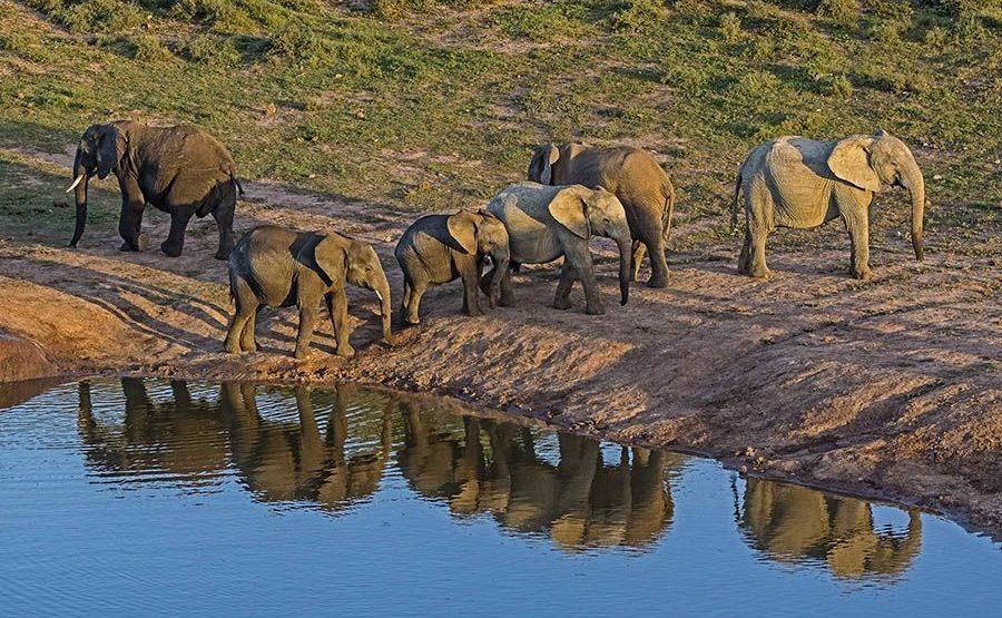 AAL-Benny-Rebel-Fotoreise-Suedafrika-Elefant
