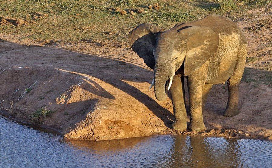 AAM-Benny-Rebel-Fotoreise-Suedafrika-Elefant