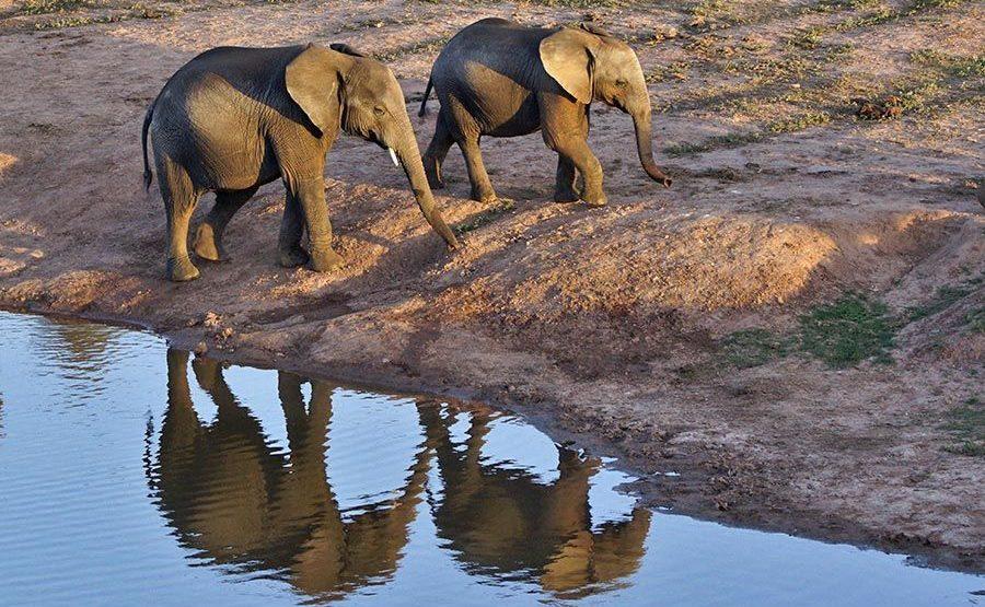 AAMA-Benny-Rebel-Fotoreise-Suedafrika-Elefant