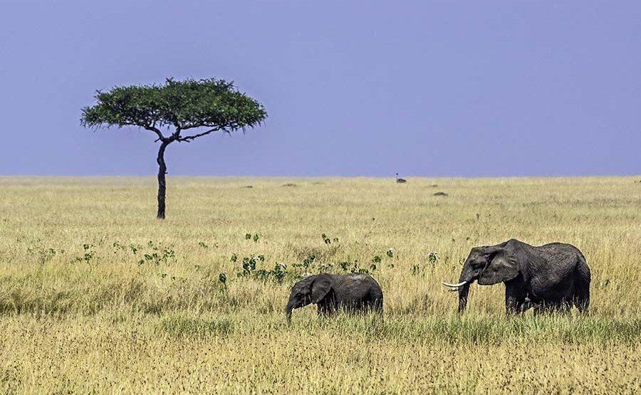 AAMQ-Benny-Rebel-Fotoreise-Kenia-Elefant