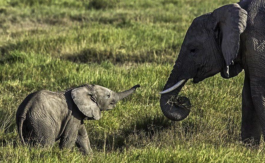 AAN-Benny-Rebel-Fotoreise-Kenia-Elefant