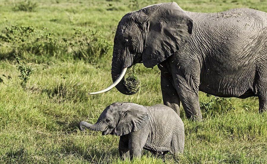 AAO-Benny-Rebel-Fotoreise-Kenia-Elefant