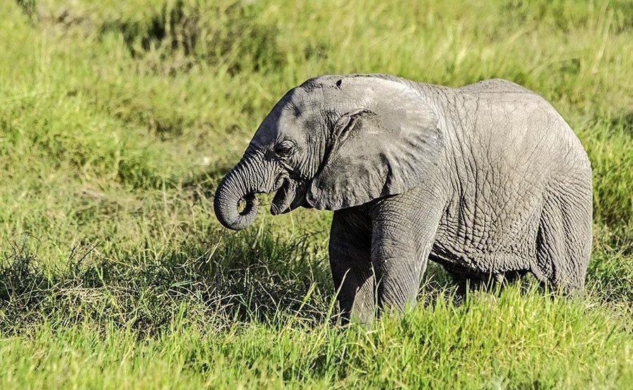 AAOP-Benny-Rebel-Fotoreise-Kenia-Elefant