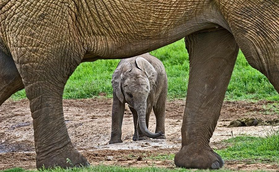 AAP-Benny-Rebel-Fotoreise-Suedafrika-Elefant