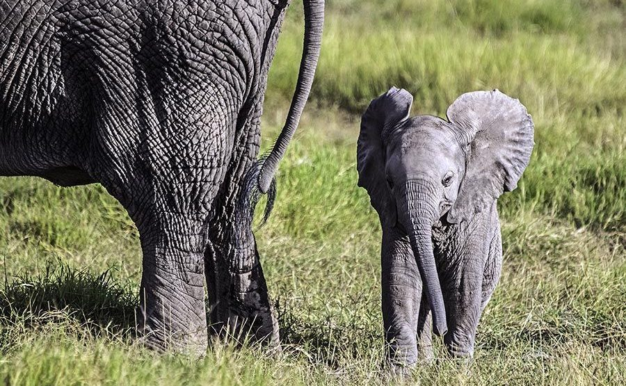 AAPA-Benny-Rebel-Fotoreise-Kenia-Elefant