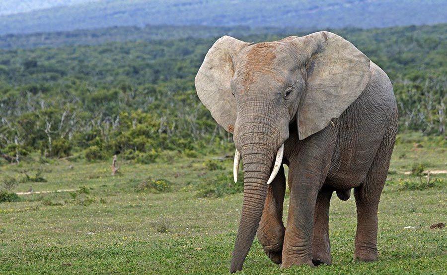 AAPBA-Benny-Rebel-Fotoreise-Suedafrika-Elefant