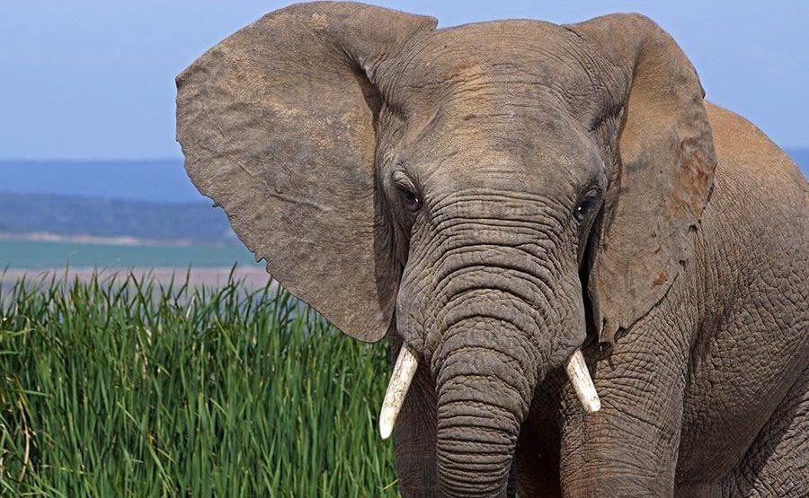 AAPBB-Benny-Rebel-Fotoreise-Suedafrika-Elefant