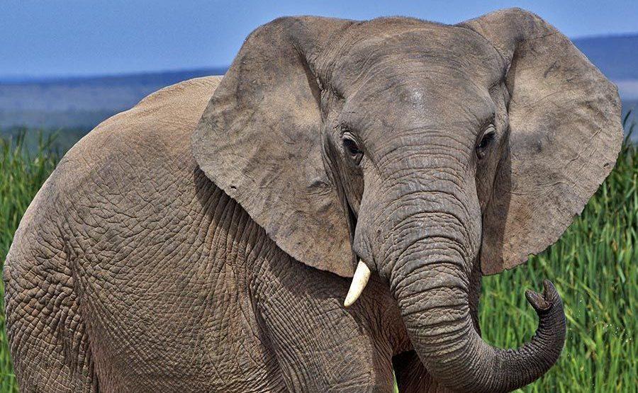 AAPBC-Benny-Rebel-Fotoreise-Suedafrika-Elefant