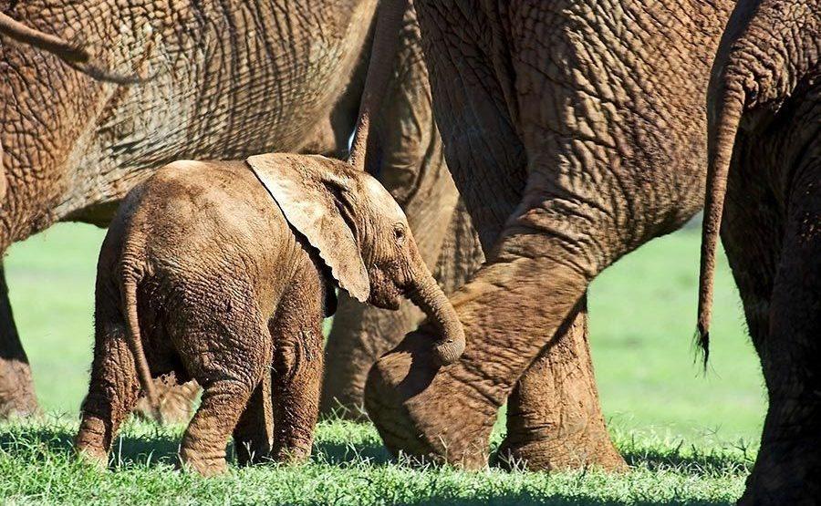 AAPQ-Benny-Rebel-Fotoreise-Suedafrika-Elefant