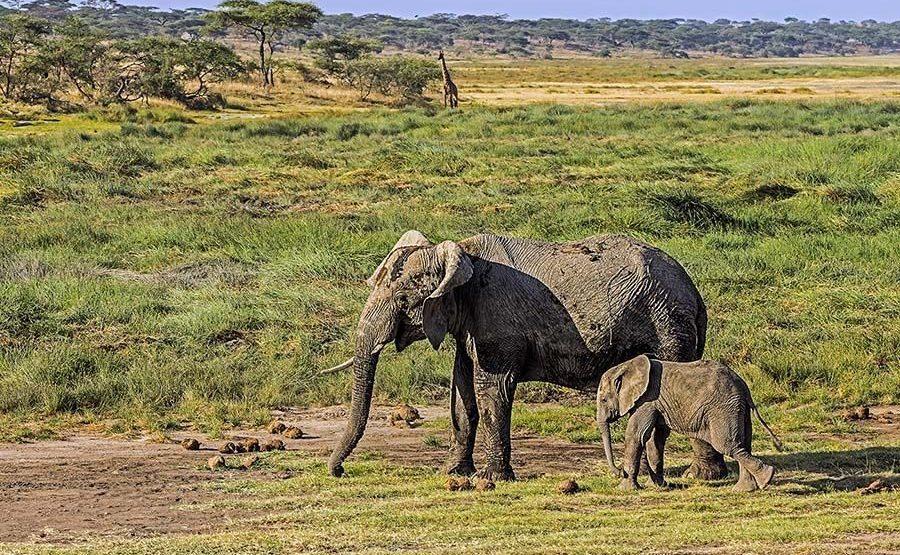 AAQ-Benny-Rebel-Fotoreise-Tansania-Elefant