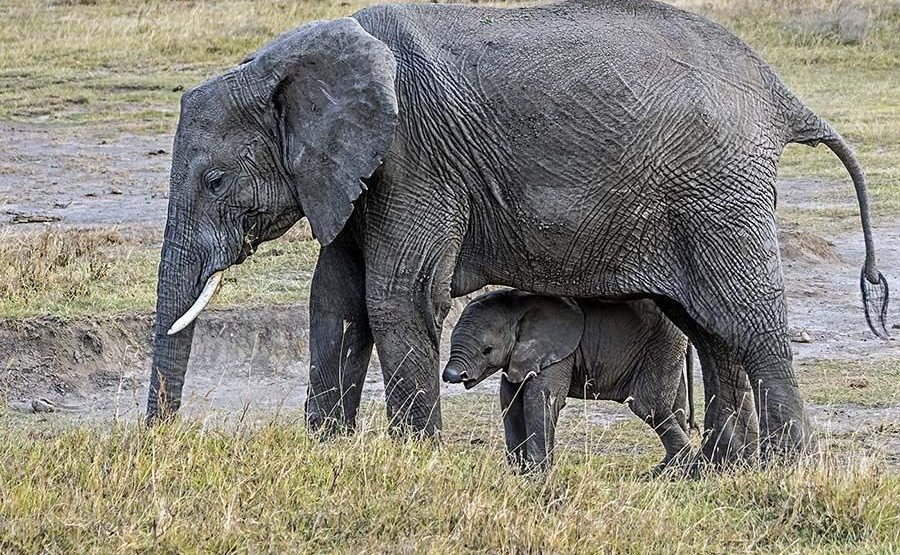 AAR-Benny-Rebel-Fotoreise-Tansania-Elefant