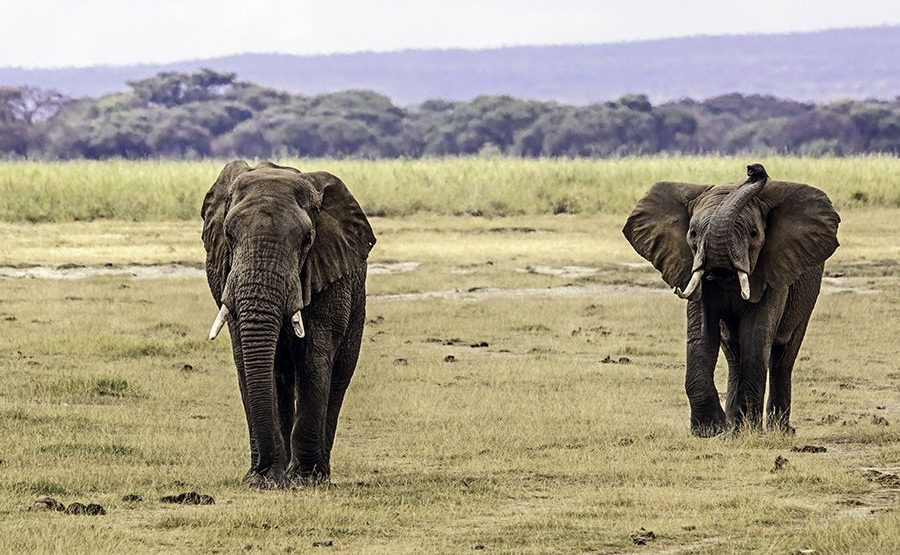 AARA-Benny-Rebel-Fotoreise-Kenia-Elefant