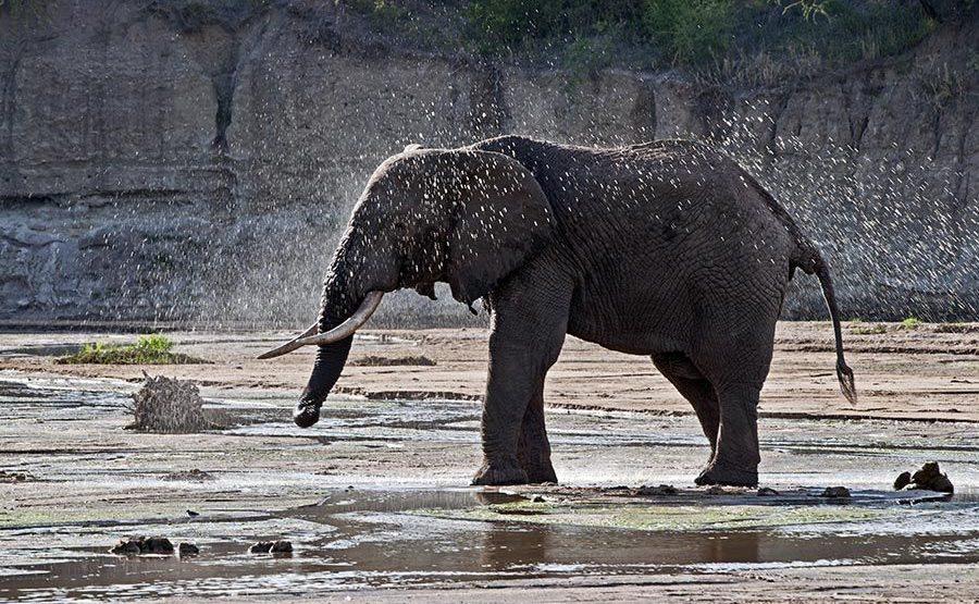 AARB-Benny-Rebel-Fotoreise-Tansania-Elefant