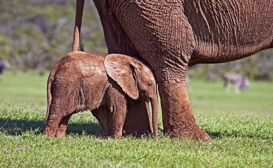 AASAA-Benny-Rebel-Fotoreise-Suedafrika-Elefant